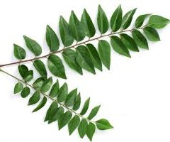 CURRY LEAVES AND ITS USES