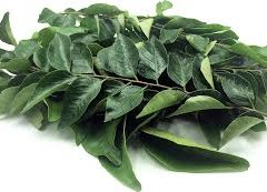 CURRY LEAVES CURE CHOLESTEROL