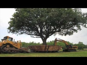 TREES CAN BE SHIFTED