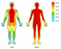 INTAKE OF FOOD CAUSES CHANGES IN THE  BODY TEMPERATURE