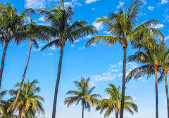 HOW DO THE PALM TREES GROW WITHOUT ANY MAINTENANCE?