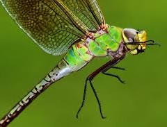 REASON FOR FINDING OF THE DRAGONFLIES AND SPAMMERS MORE ONLY DURING RAINY SEASON