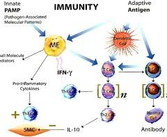 TWO KINDS OF IMMUNITY