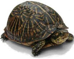 ONLY TURTLE IS HAVING A LONG LIFE IN THE WORLD
